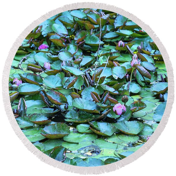 Painted Water Lilies Round Beach Towel