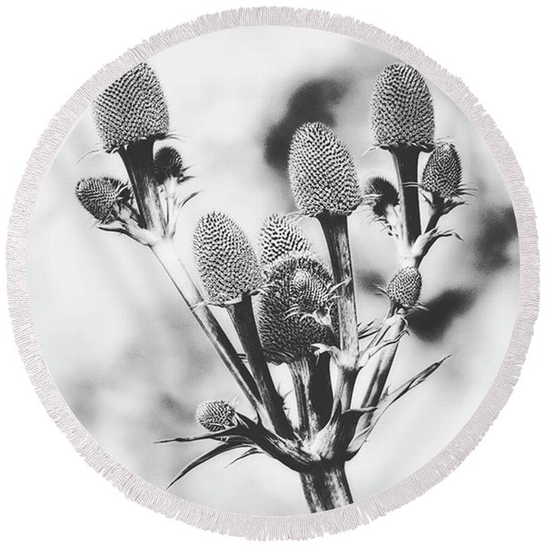 Eryngium #flower #flowers Round Beach Towel