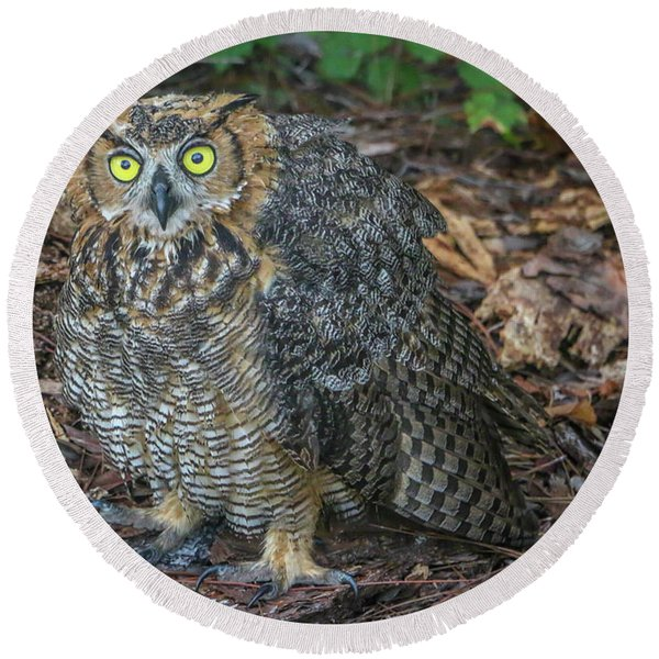 Eye To Eye With Owl Round Beach Towel