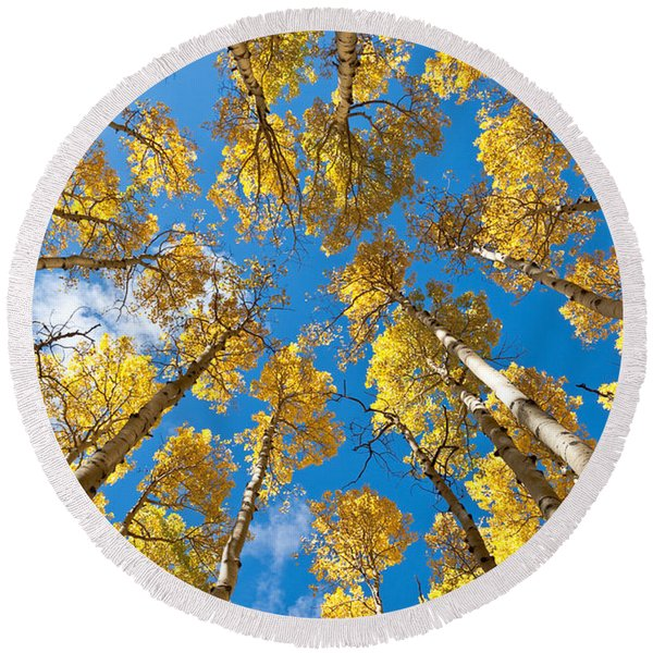 Fall Colored Aspens In The Inner Basin Round Beach Towel