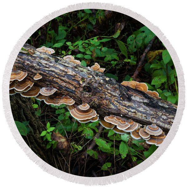 Round Beach Towel featuring the photograph False Turkeytail by Lon Dittrick