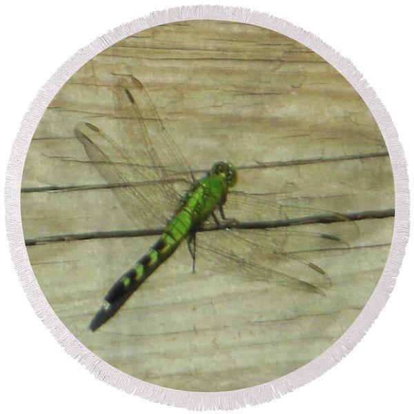 Female Eastern Pondhawk Dragonfly Round Beach Towel