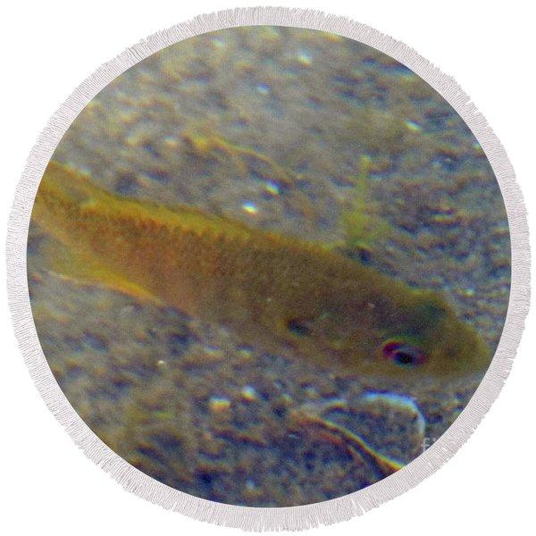 Fish Sandy Bottom Round Beach Towel