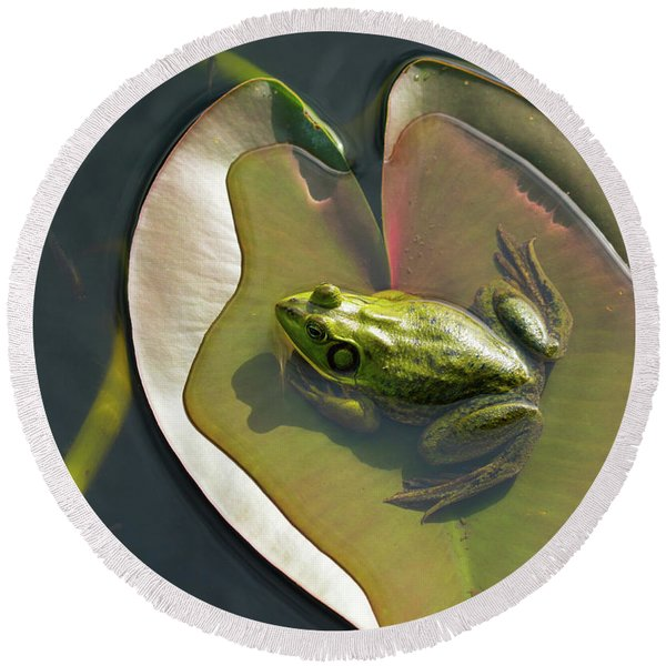 Frog Chilling On A Lilly Pad Delray Beach Florida Round Beach Towel