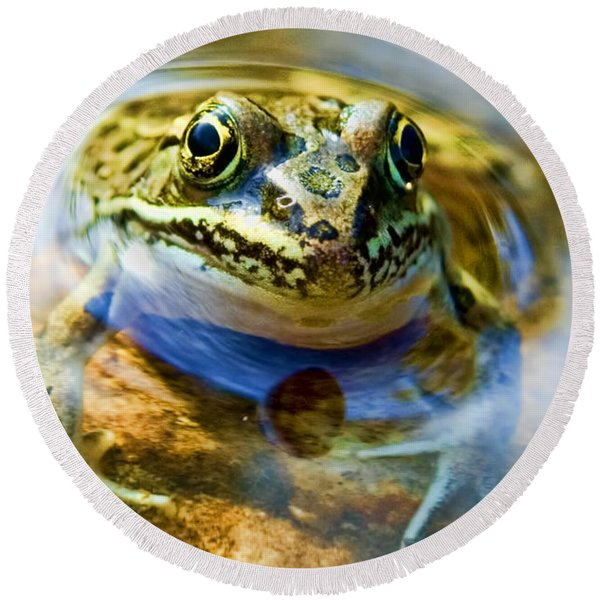 Frog In Pond Round Beach Towel