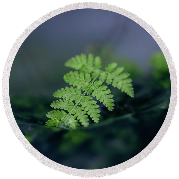 Frozen Fern II Round Beach Towel