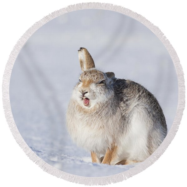 Funny Face - Mountain Hare - Scottish Highlands  #13 Round Beach Towel
