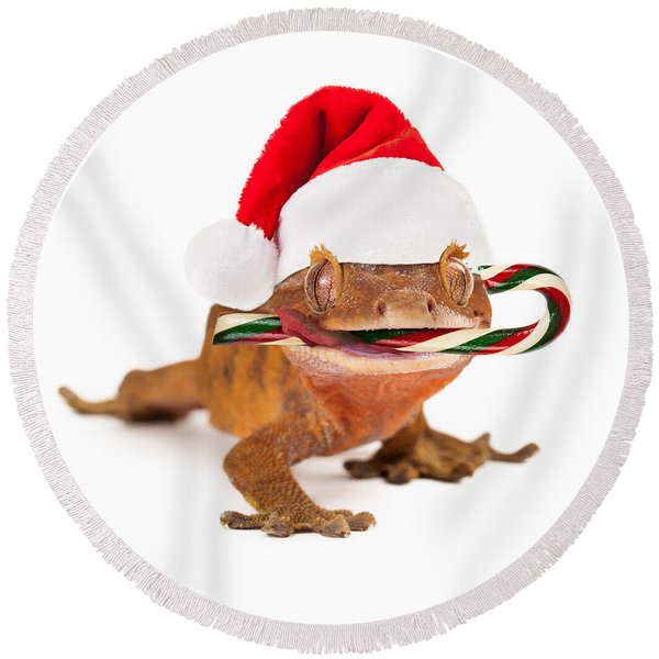 Funny Lizard Eating Christmas Candy Cane Round Beach Towel