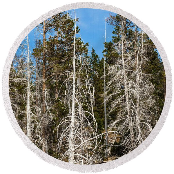 Round Beach Towel featuring the photograph Ghost Pines At Yellowstone National Park by Lon Dittrick