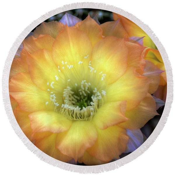 Golden Cactus Bloom Round Beach Towel