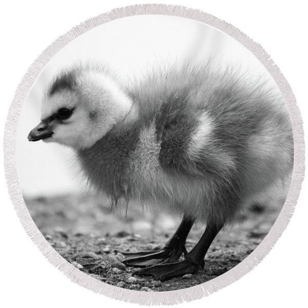 Goose Chick Round Beach Towel