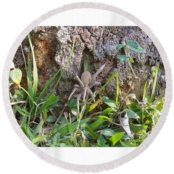 Grasspider  From Animall By David Round Beach Towel
