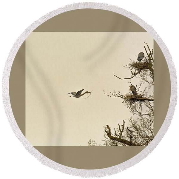 Great Blue Heron Nest Building Round Beach Towel