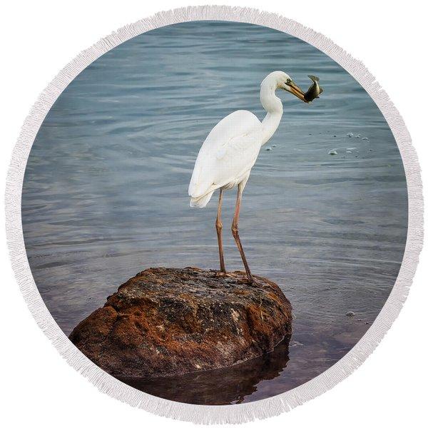 Great White Heron With Fish Round Beach Towel