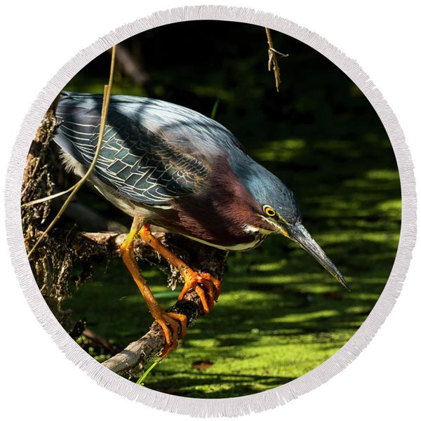 Green Heron Round Beach Towel