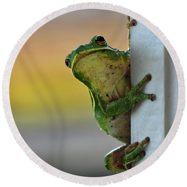 Green Tree Frog  It's Not Easy Being Green Round Beach Towel