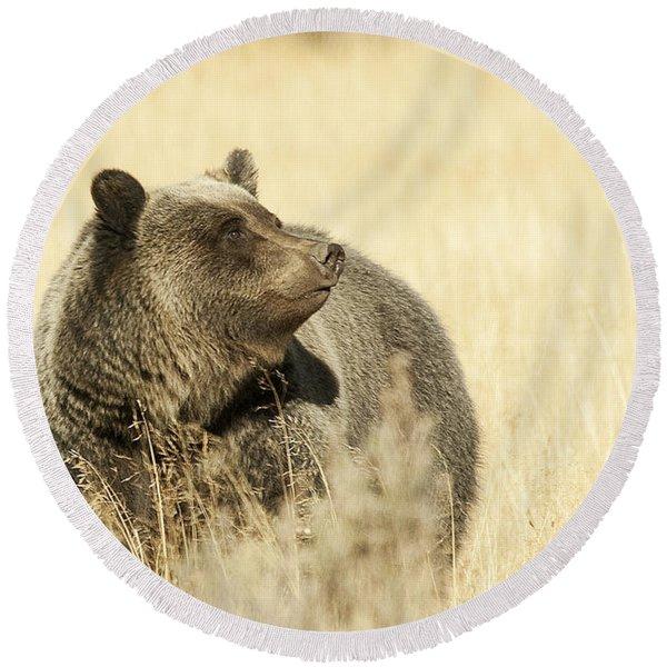 Grizzly Bear Round Beach Towel