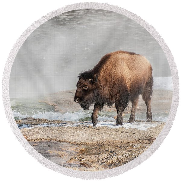 Handsome Young Bison Round Beach Towel