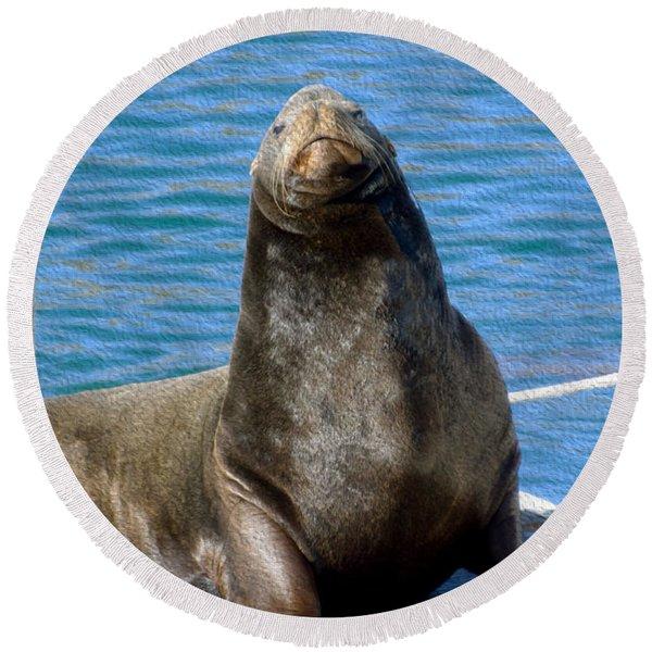 Harbor Seal In Morro Bay Round Beach Towel