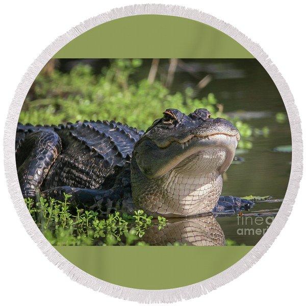 Heads-up Gator Round Beach Towel