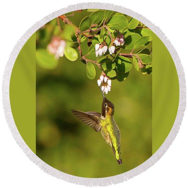 Hummingbird And Manzanita Blossom Round Beach Towel