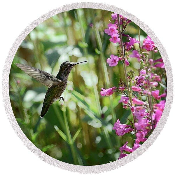 Hummingbird On Perry's Penstemon Round Beach Towel