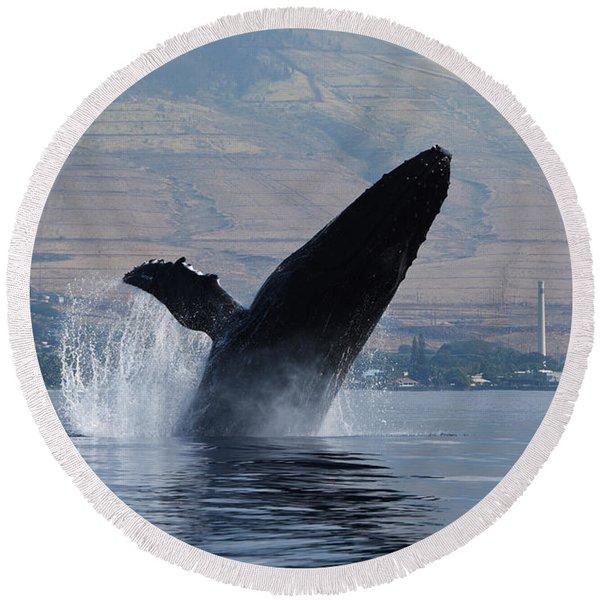 Humpback Whale Breach Round Beach Towel