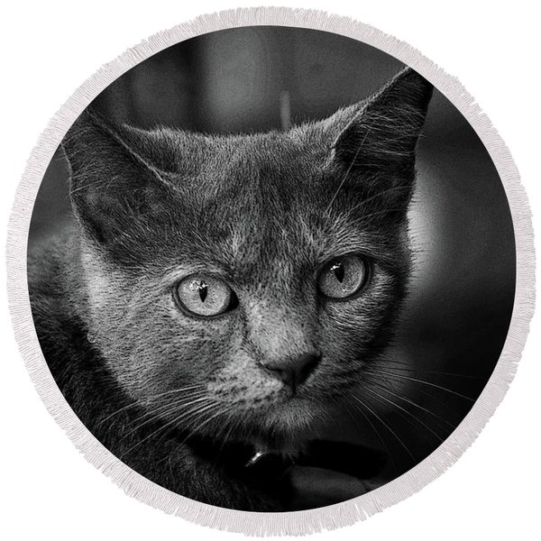 In The Know Pet Art Bw Round Beach Towel