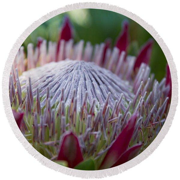 King Protea Island Flowers Jewel Of The Garden Round Beach Towel