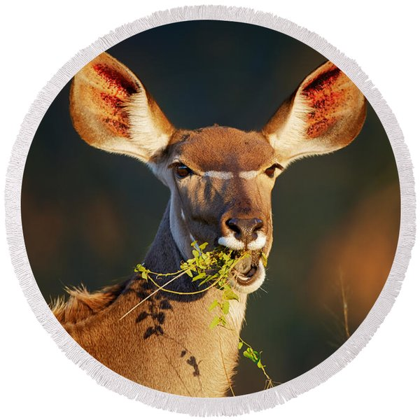 Kudu Portrait Eating Green Leaves Round Beach Towel