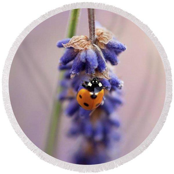 Ladybird On Norfolk Lavender  #norfolk Round Beach Towel