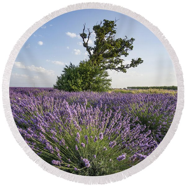Round Beach Towel featuring the photograph Lavender Provence  by Juergen Held