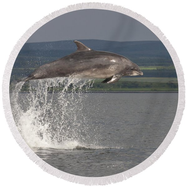 Leaping Bottlenose Dolphin  - Scotland #39 Round Beach Towel