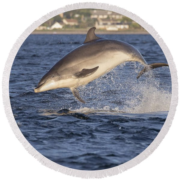 Jolly Jumper - Bottlenose Dolphin #40 Round Beach Towel