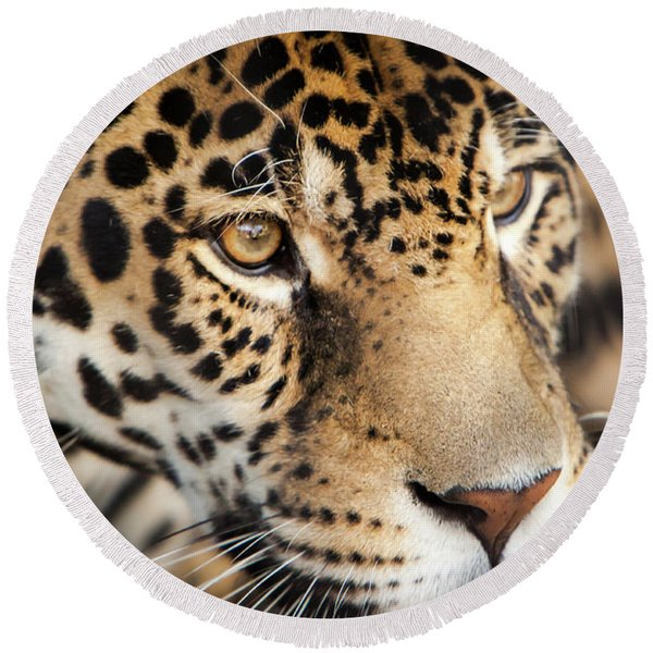 Leopard Face Round Beach Towel