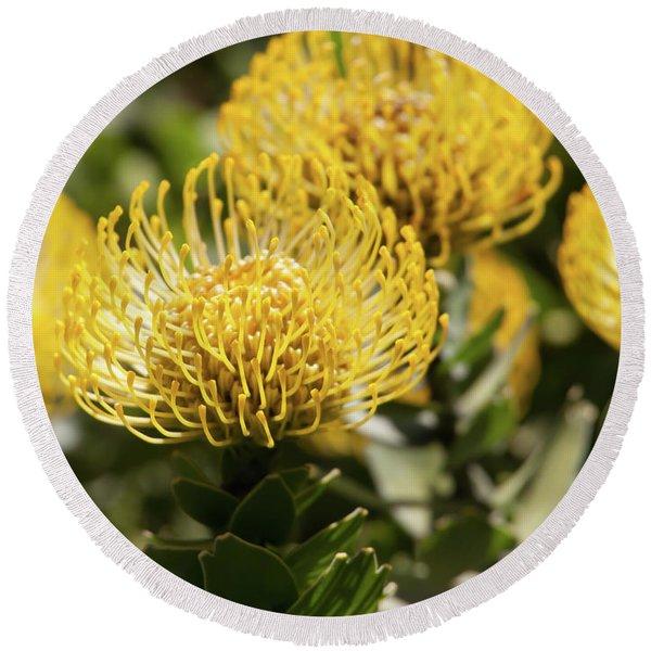 Leucospermum Veldfire Pincushion Flower 5d3192 Round Beach Towel