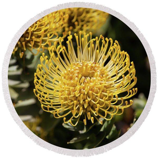 Leucospermum Veldfire Pincushion Flower 5d3195 Round Beach Towel