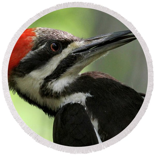Lick It Up - Pileated Woodpecker Round Beach Towel