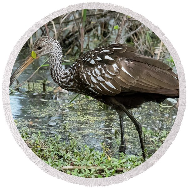 Limpkin Round Beach Towel