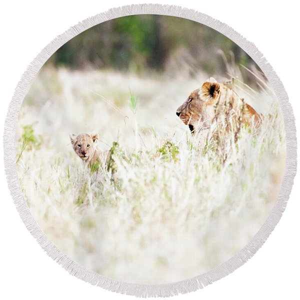 Lioness With Baby Cub In Grasslands Round Beach Towel