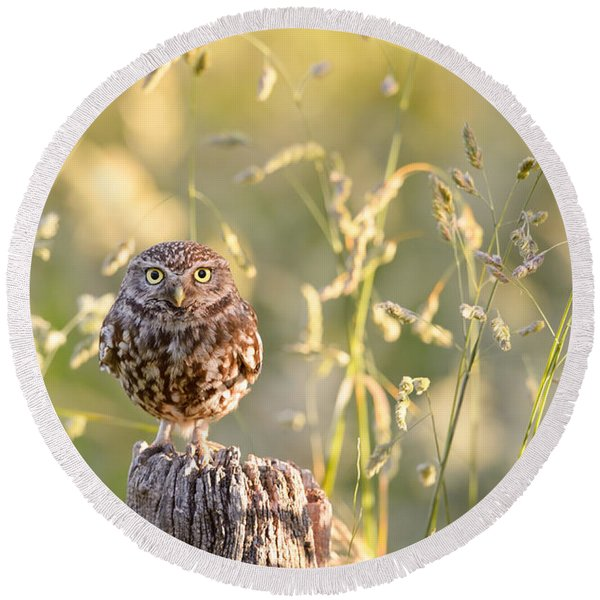 Little Owl Big World Round Beach Towel