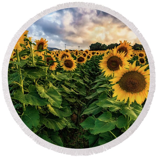 Long Island Sunflowers  Round Beach Towel
