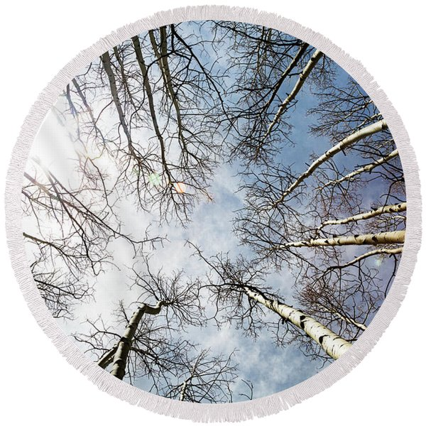 Looking Up On Tall Birch Trees Round Beach Towel