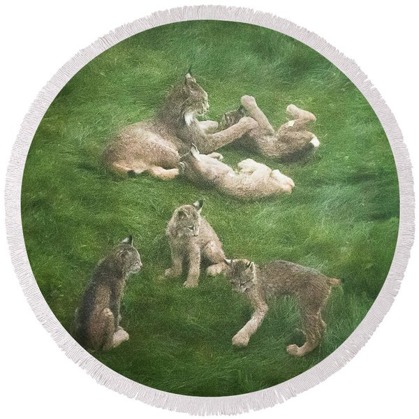 Round Beach Towel featuring the photograph Lynx In The Mist by Tim Newton