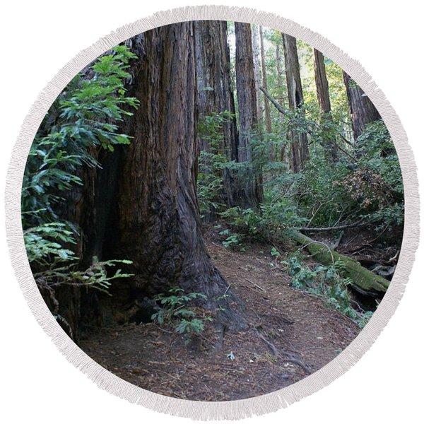 Magical Path Through The Redwoods On Mount Tamalpais Round Beach Towel