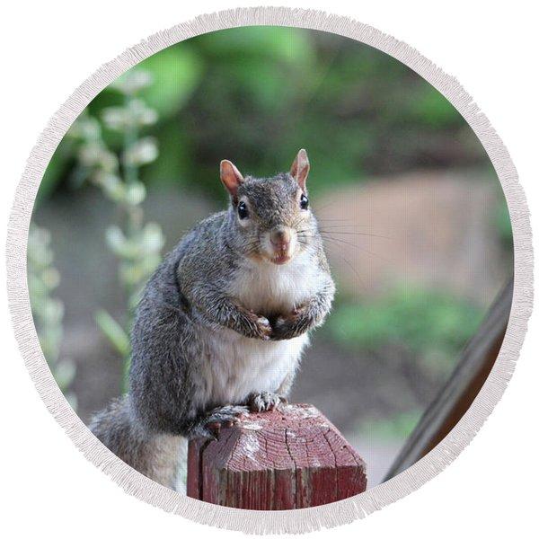 Mama Squirrel Round Beach Towel