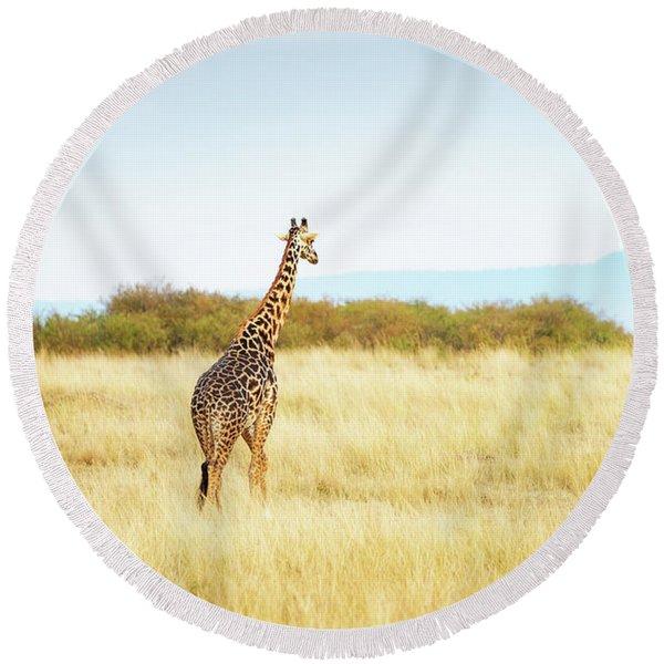 Masai Giraffe Walking In Kenya Africa Round Beach Towel