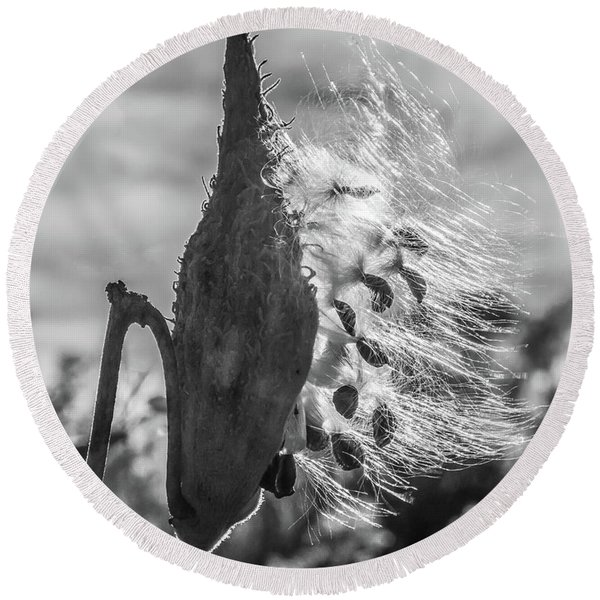 Round Beach Towel featuring the photograph Milkweed Pod Back Lit B And W by Lon Dittrick