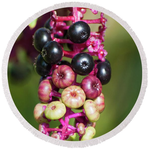 Mixed Berries On Branch Round Beach Towel