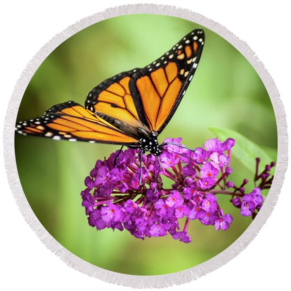 Round Beach Towel featuring the photograph Monarch Moth On Buddleias by Carolyn Marshall